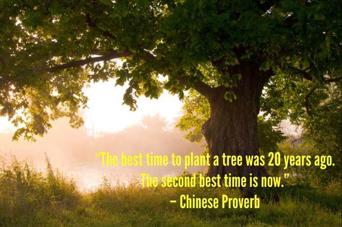 blog-plant-tree